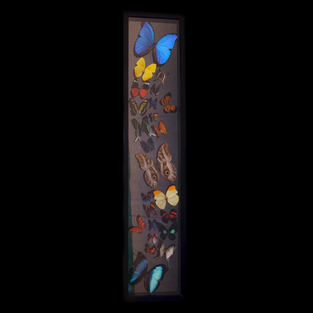 butterflies_flat