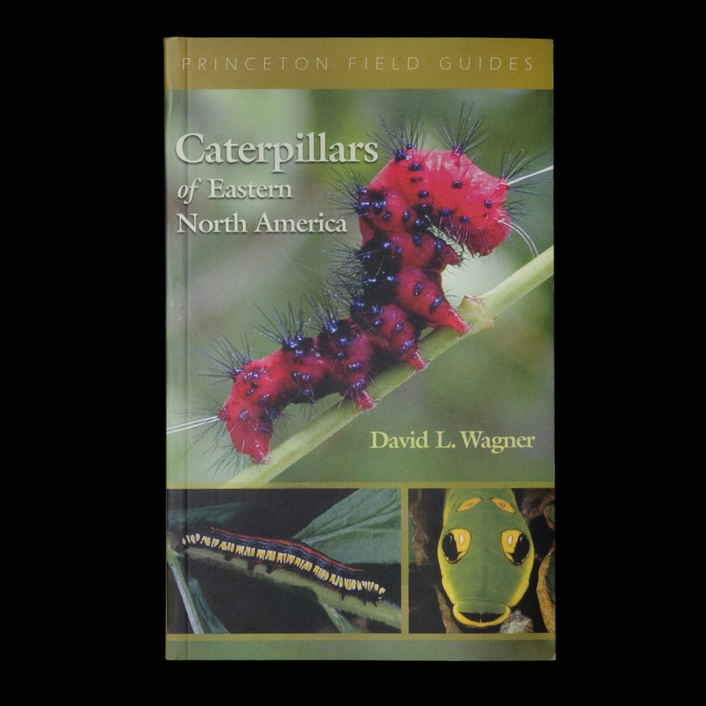 S7_square_caterpillars_flat