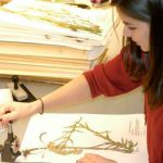 Photo of student working with an herbarium specimen