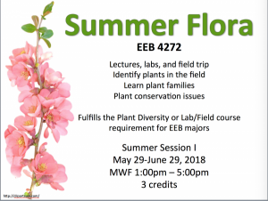 summer-flora